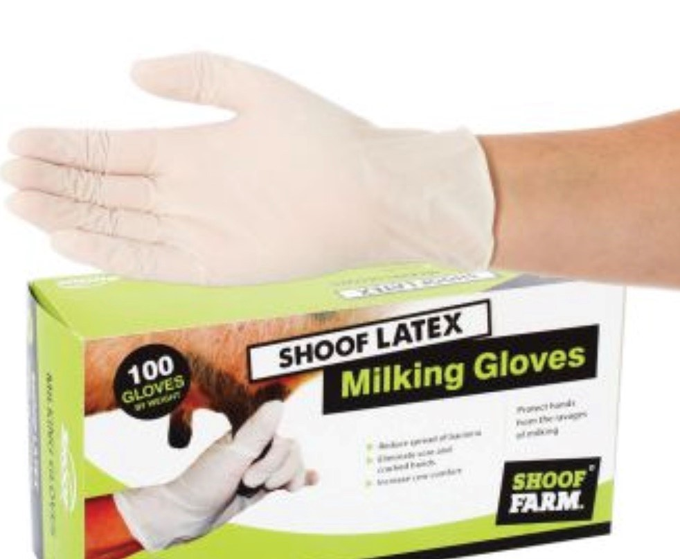 ECONOMY LATEX LIGHTLY POWDERED GLOVE LARGE